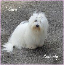 Cottonly Sara