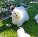 """""""MAYA"""" - Cottonly Maya"""