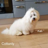 """KALI"" - Cottonly Callista"
