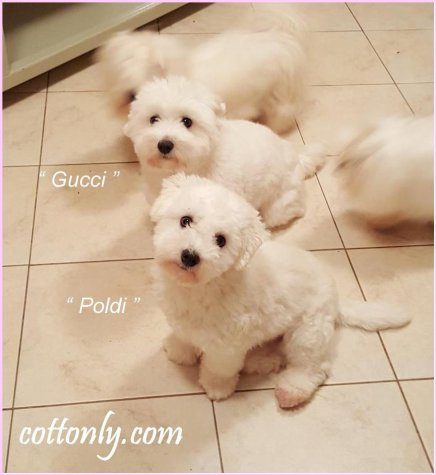 Gucci & Poldi