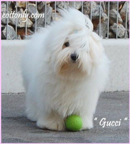 """"""" GUCCI """" – Gucci du Castel de la Roche aux Fees"""
