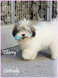 """""""Cherry"""" - Miriam's Joy Cherry"""