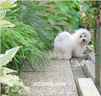 """"""" JULI """" - Cottonly Juli"""