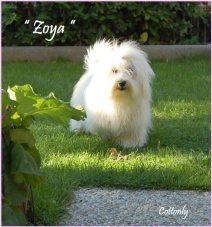 """"""" ZOYA """" – Cottonly Zoya"""