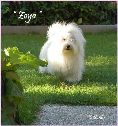 """ ZOYA "" – Cottonly Zoya"