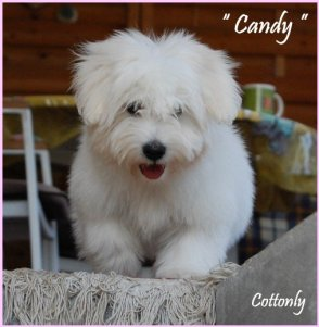 """ CANDY "" - Cottonly Candy"